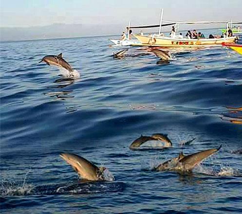 Wisata Dolphin di Lovina Bali