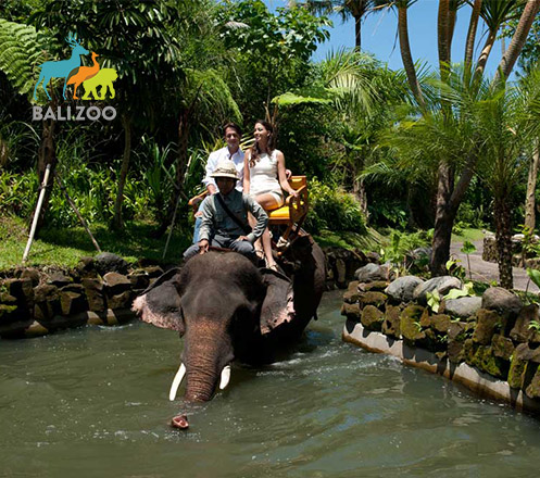 Zoo + Elephant Safari Expedition at Bali Zoo 01