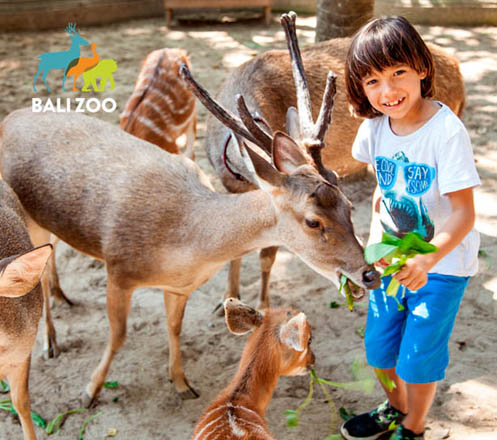 Admission for Bali Zoo