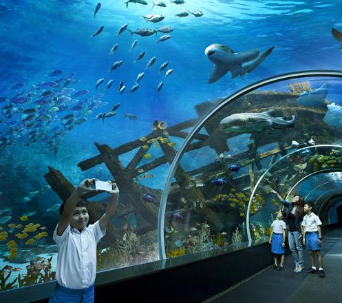 South East Asia (SEA) Aquarium Singapore 02
