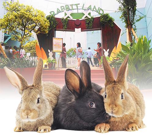 Rabbit Land Kelapa Gading