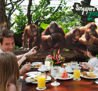 Singapore Zoo + Tram Ride...